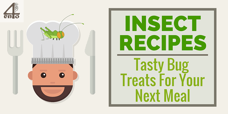 Insect Recipes: Tasty Bugs For Your Next Meal