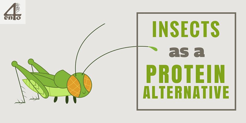 Insects as a Protein Alternative