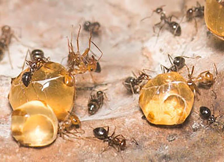 2. ANTS