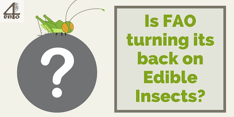Is FAO turning its back on Edible Insects?: FAO's Senior Forestry Officer Paul Vantomme retires!