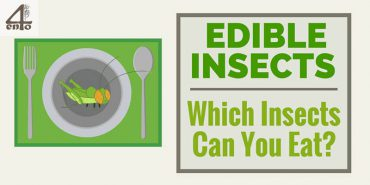 Edible Insects List – Which Insects Can You Eat?