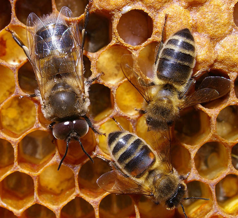 6. BEES