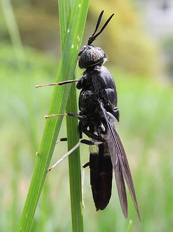 18. Flies